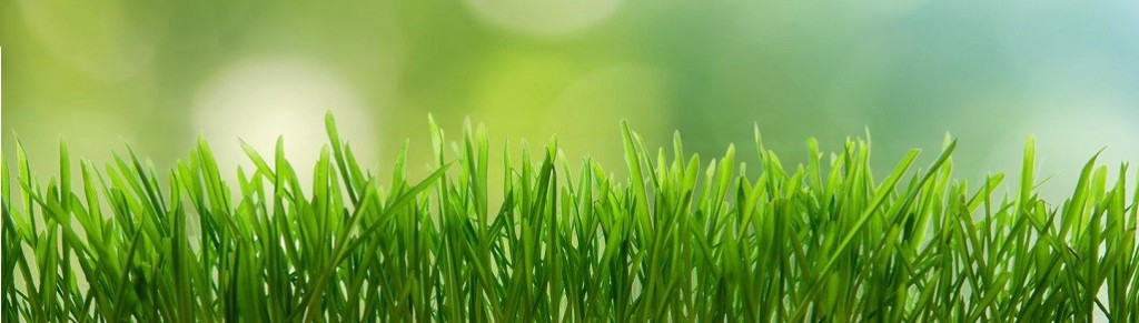 Lawn-Care-1026x292