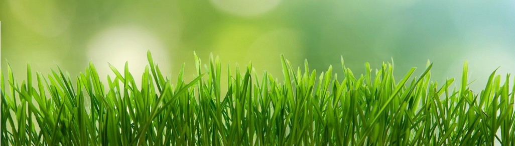 Steps for healthy lawn for Garden care